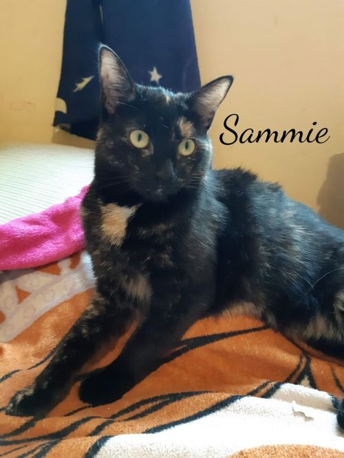 Photo of Sammie Or Sam