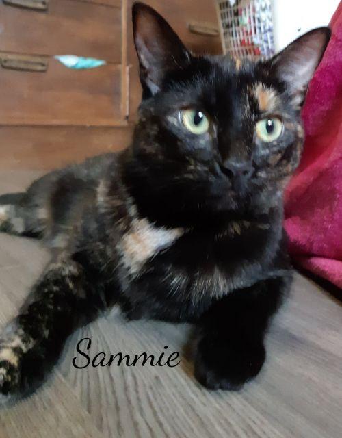 Photo of Sammie