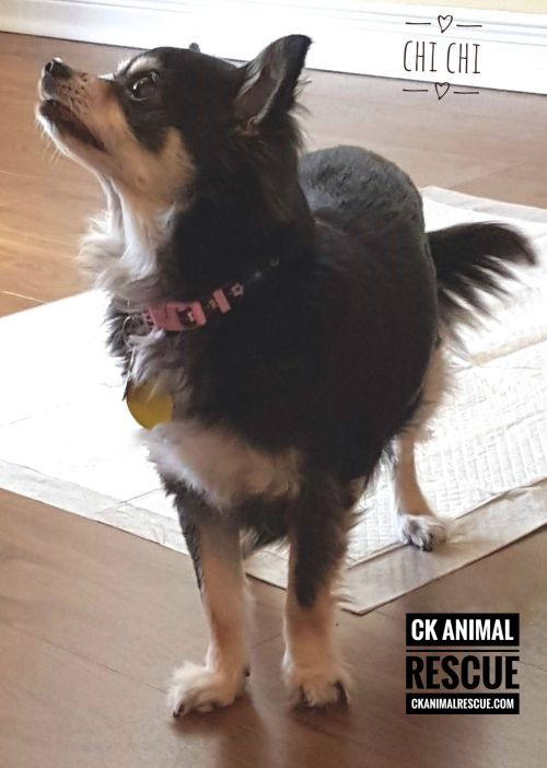 Photo of Chi Chi