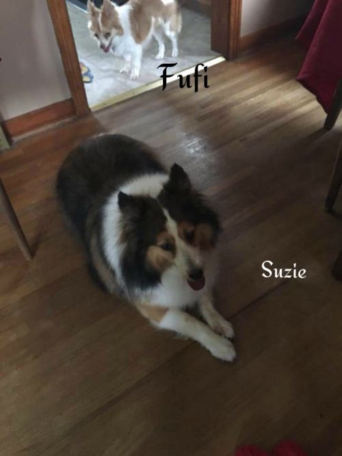 Photo of Suzy & Fufi
