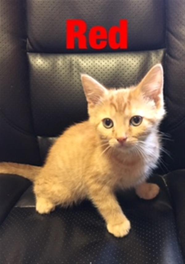 click for pet details