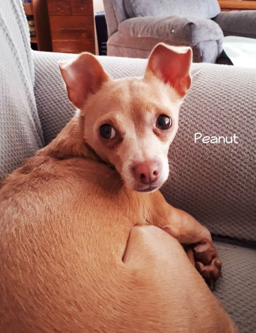 Photo of Peanut