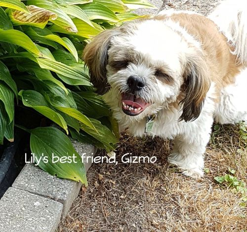 Photo of Lily And Gizmo