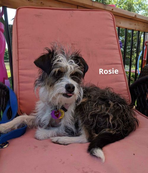 Photo of Rosie