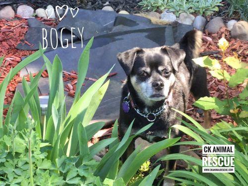 Photo of Bogey