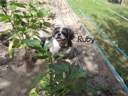 Photo of Ruby