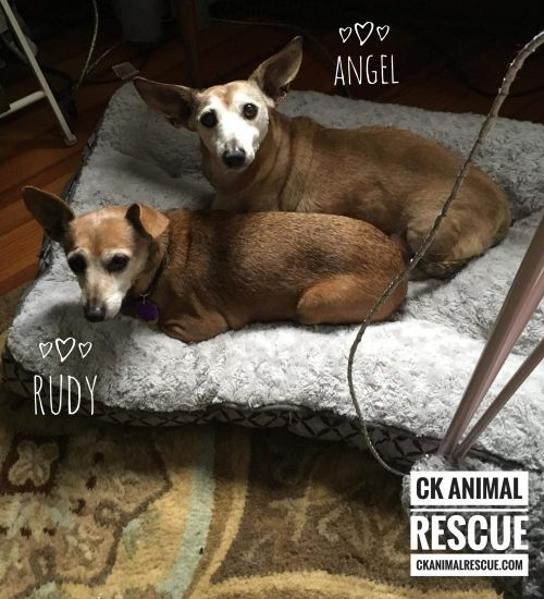 Photo of Angel And Rudy