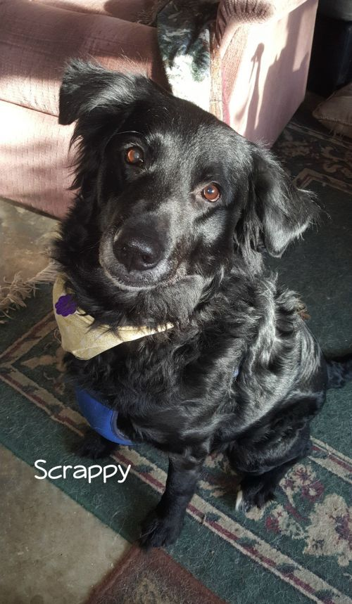 Photo of Scrappy