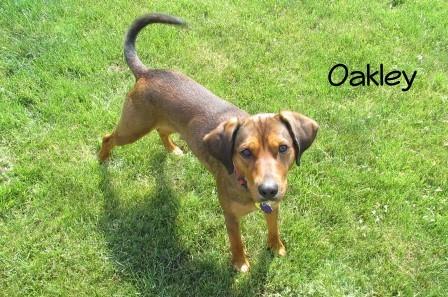 Photo of Oakley