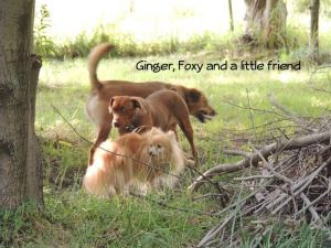 Photo of Ginger And Foxy