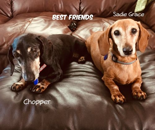 Photo of Chopper And Sadie Grace