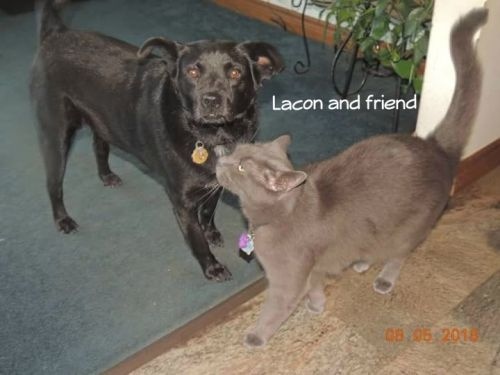 Photo of Lacon