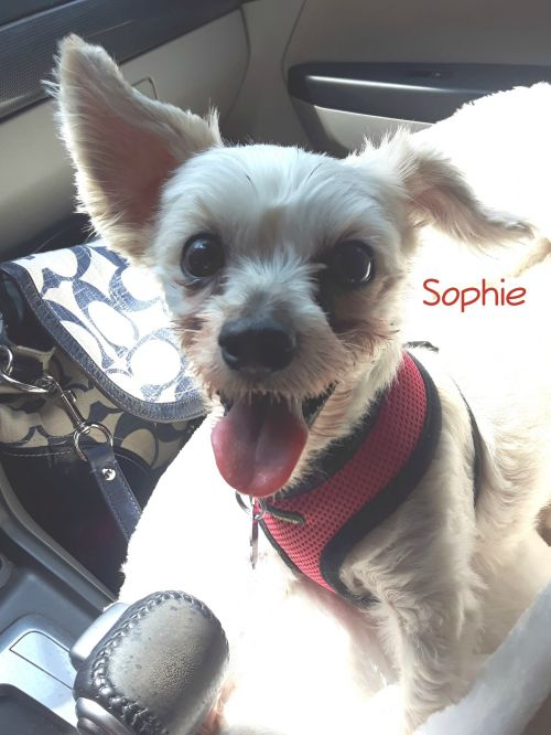 Photo of Sophie