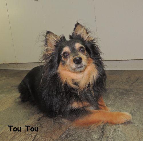 Photo of Tou Tou