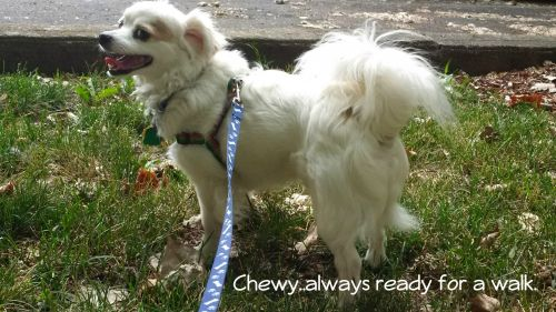 Photo of Chewy