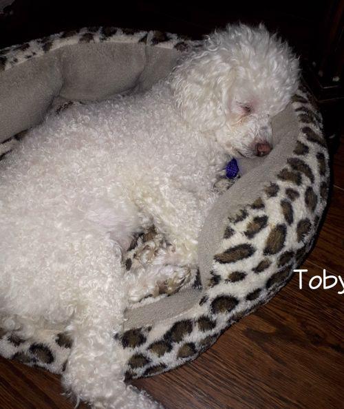 Photo of Toby