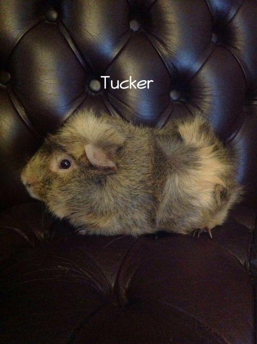Photo of Tucker