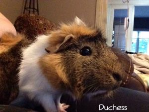 Photo of Duchess