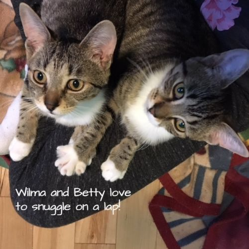 Photo of Betty And Wilma