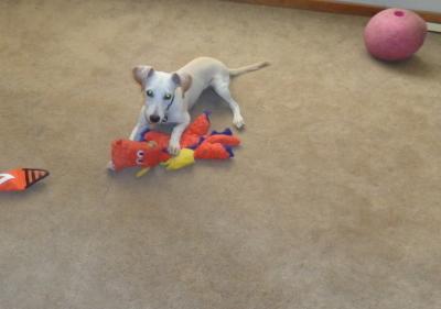 Tucker - Only $85 adoption!!!!!