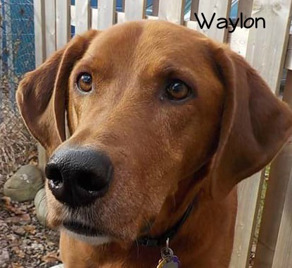 Photo of Waylon