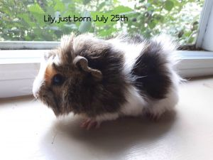 Photo of Lily