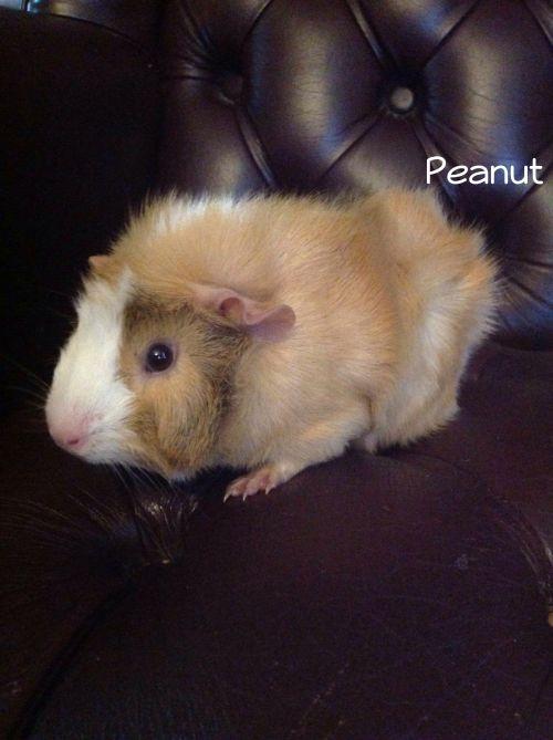 Photo of Peanut