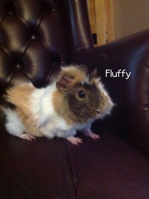 Photo of Fluffy