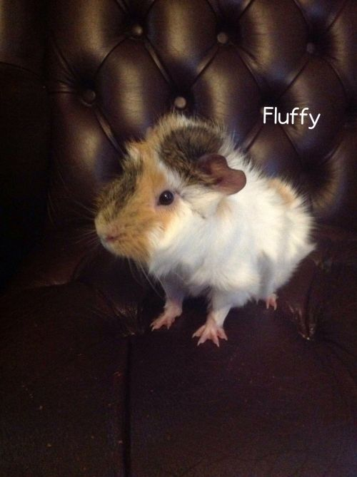 Photo of Fluffy