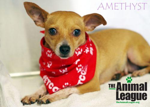 Photo of Amethyst