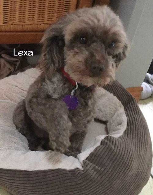 Photo of Lexa