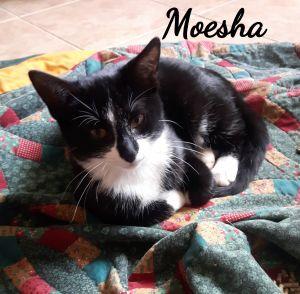 Photo of Moesha