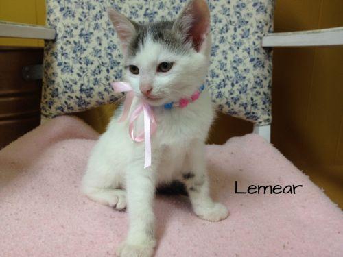 Photo of Lemear
