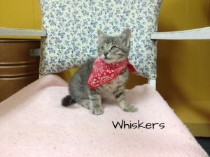 Photo of Whiskers