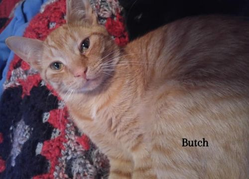 Photo of Butch