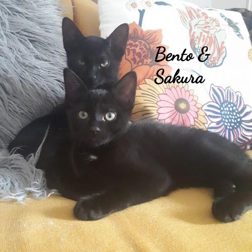 Photo of Bento And Sakura
