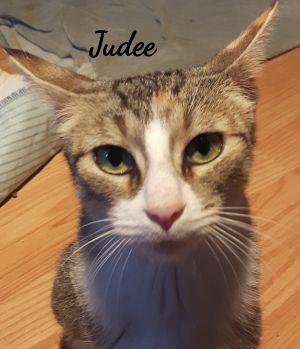 Photo of Judee