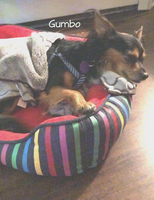Photo of Gumbo