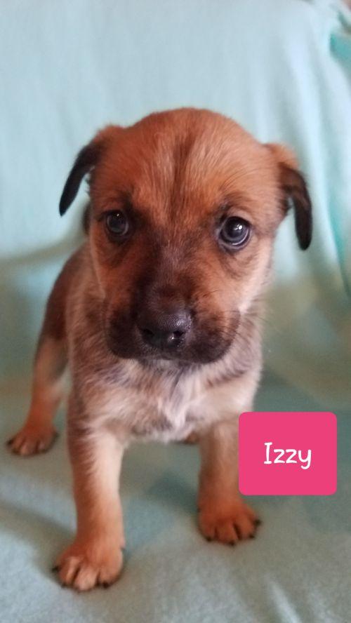 Izzy - Pre Adoption Only
