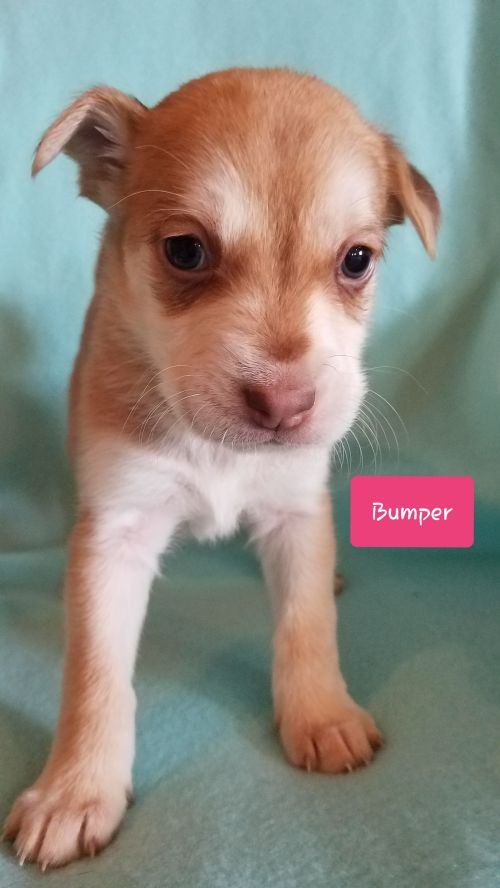 Bumper - Pre Adoption Only