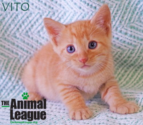 Photo of Vito