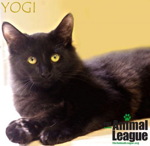 Photo of Yogi