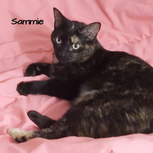Photo of Sammie