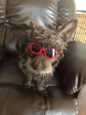 Griffin - Adoption Pending
