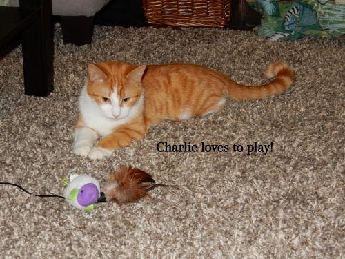 Photo of Charlie