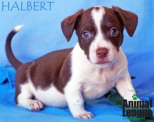 Photo of Halbert