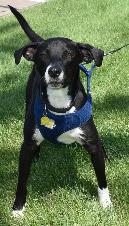 Tony - Foster or Foster to Adopt Needed