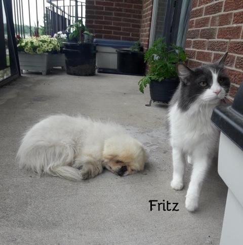 Photo of Fritz