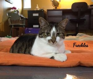 Photo of Freckles
