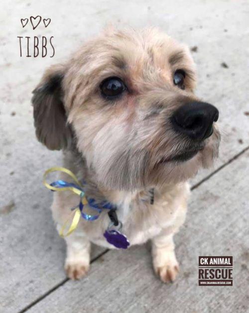 Photo of Tibbs